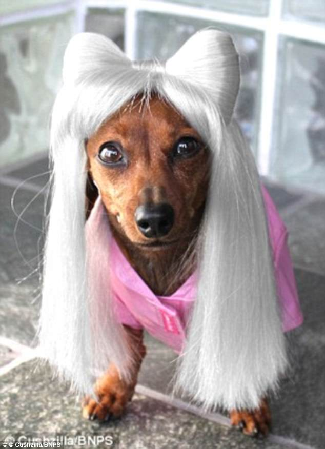 Users Post Photos Of Dogs And Cats In Bespoke Party Wigs