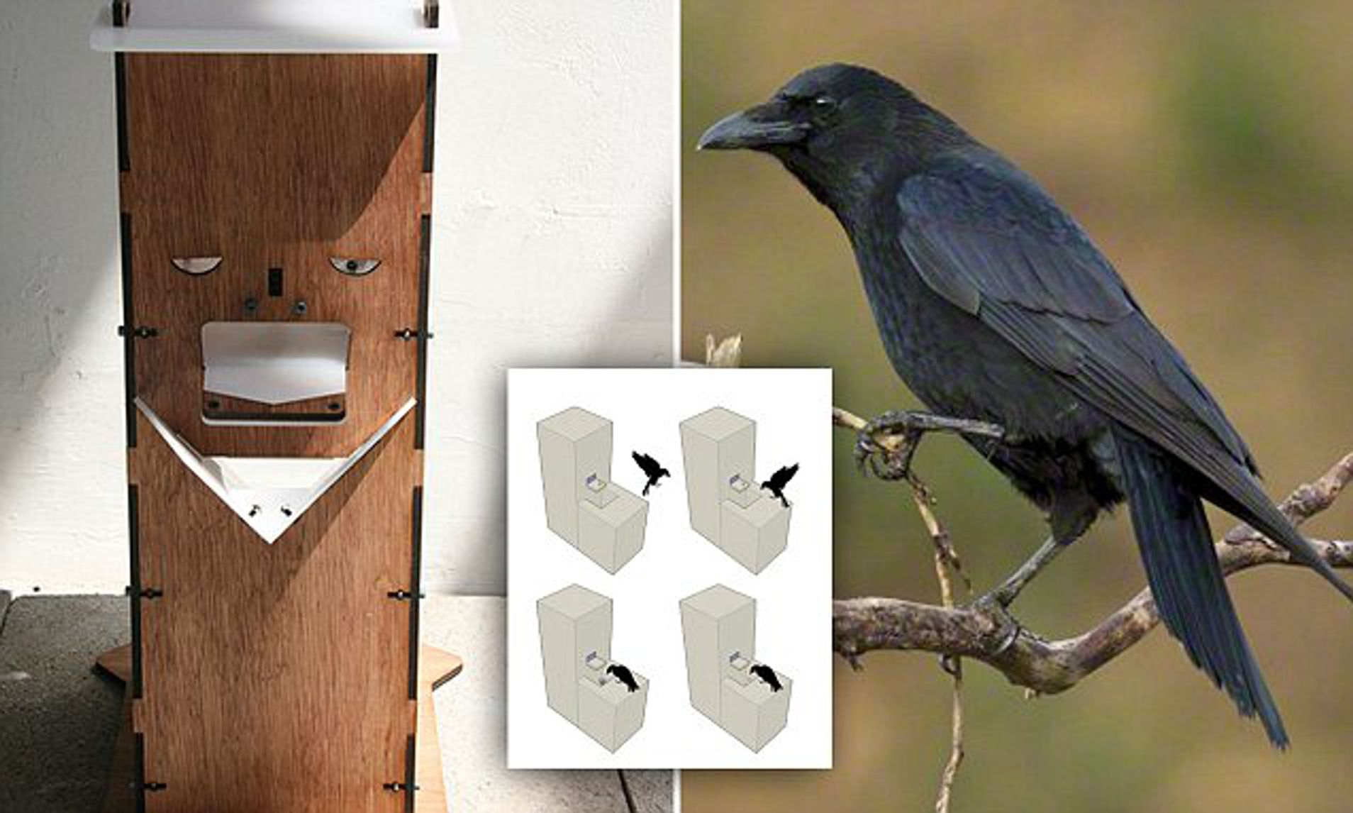 The Crow Box feeder trains birds to PAY for their food | Daily ...