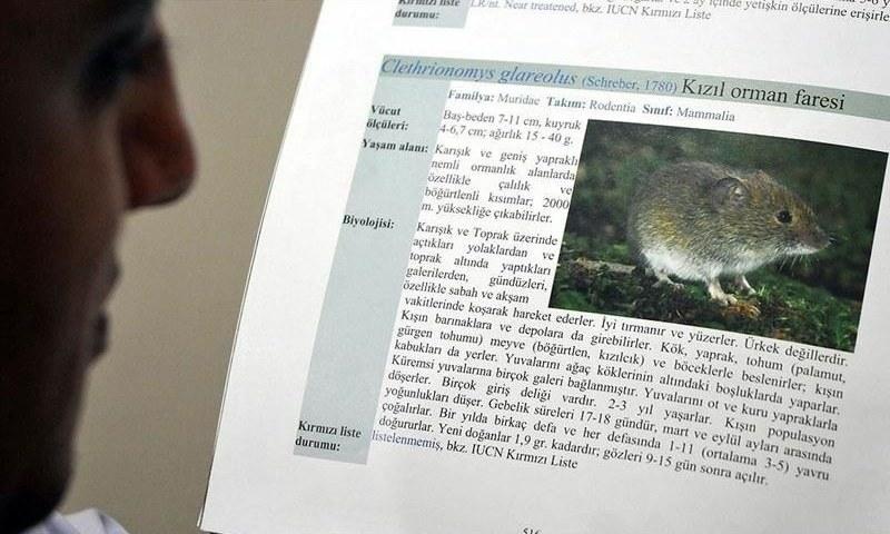Man dies of hantavirus in China: report - World —