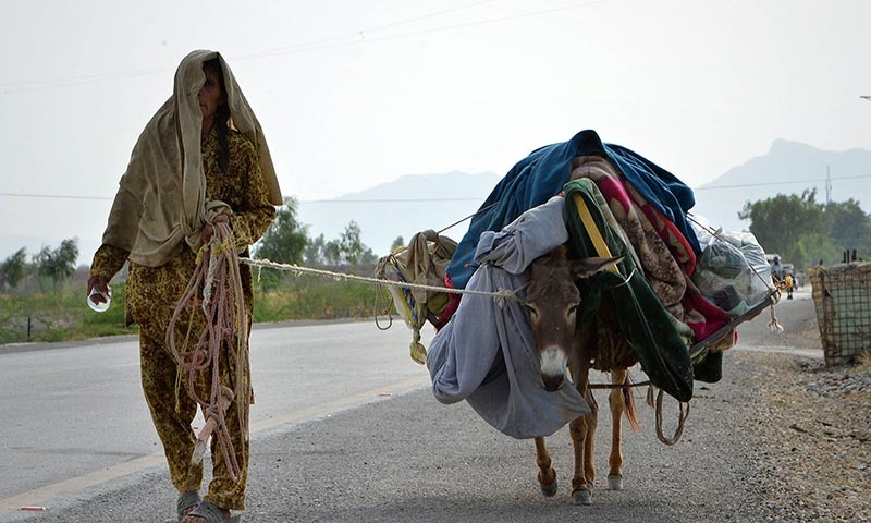 A woman, fleeing from North Waziristan tribal region, arrives with her donkey in Bannu district. — Photo by AFP