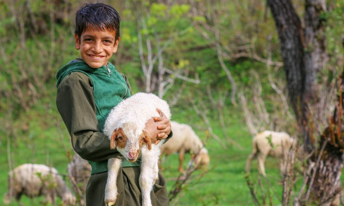 A young boy with an ewe.