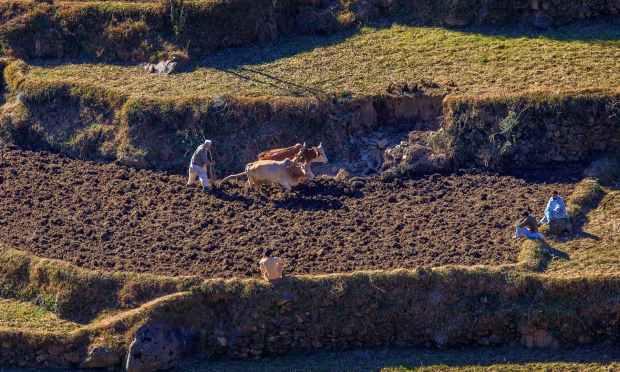 کھیتوں میں کام جاری ہے. — فوٹو سید مہدی بخاری۔