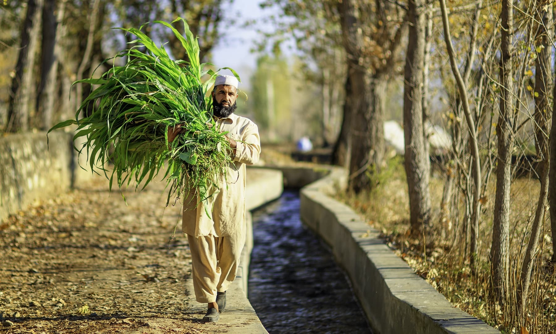 A farmer in Kabal, Swat.