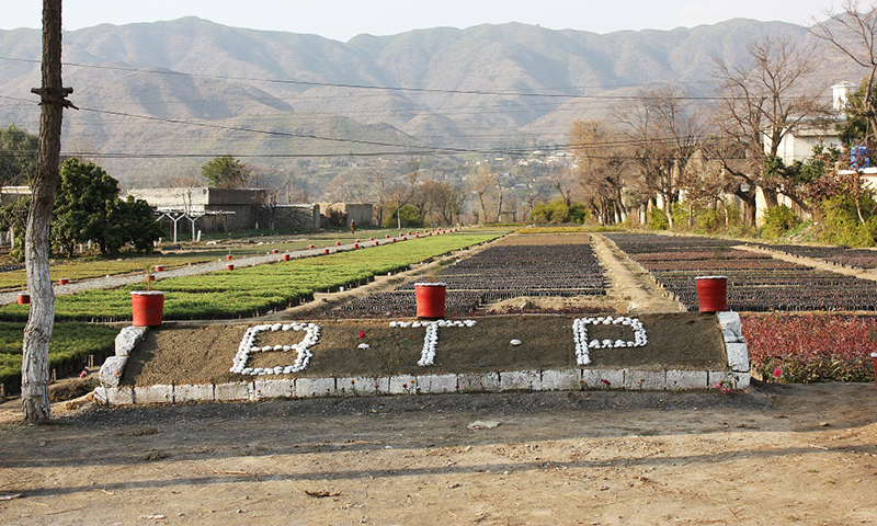 The Billion Tree Project's government nursery in Haripur -Image by Asim Ali