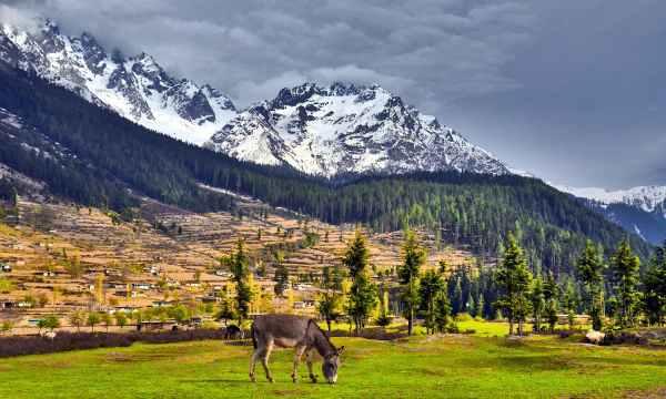 Boyun Meadow, Swat. ─ Photo by Muhammad Akram Attari