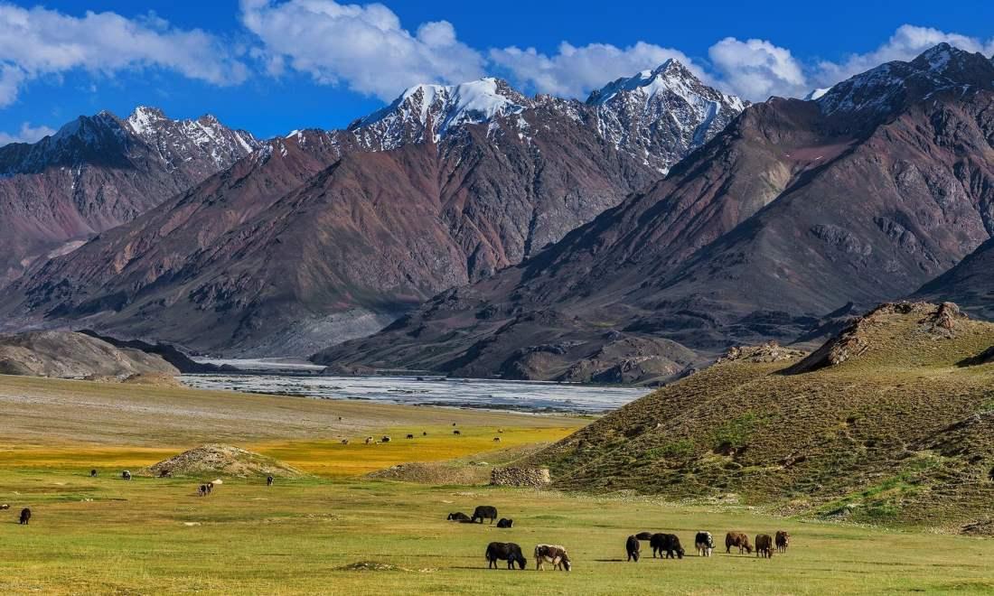 Herd of yaks on the trek. — *Photo by author*