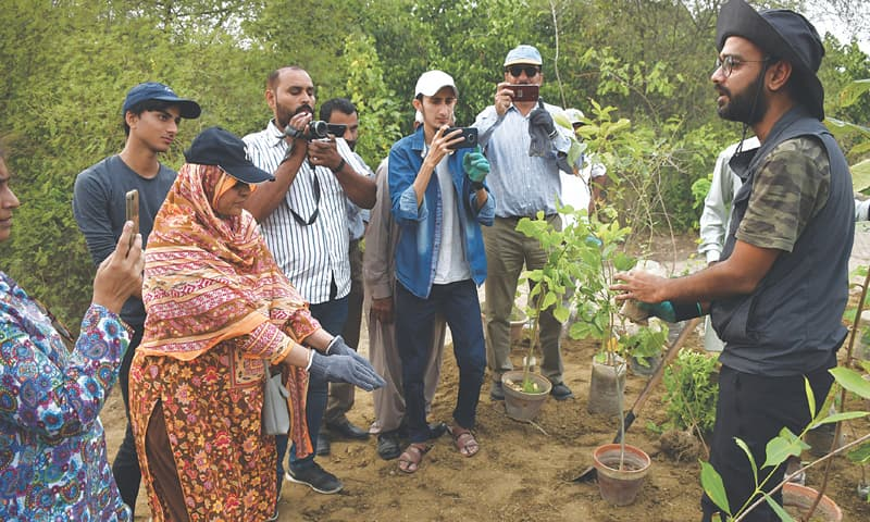 """""""we are creating miyawaki forests every week in bengaluru,"""" Turning Barren Land Into Dense Forest In A Short Time Newspaper Dawn Com"""