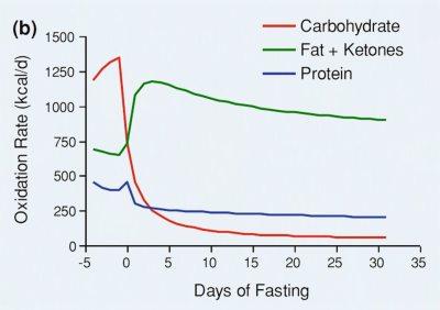 Forbrennig av fett vs. karb i faste.