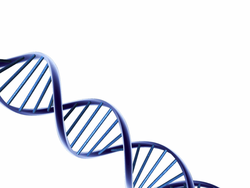 download free png dna