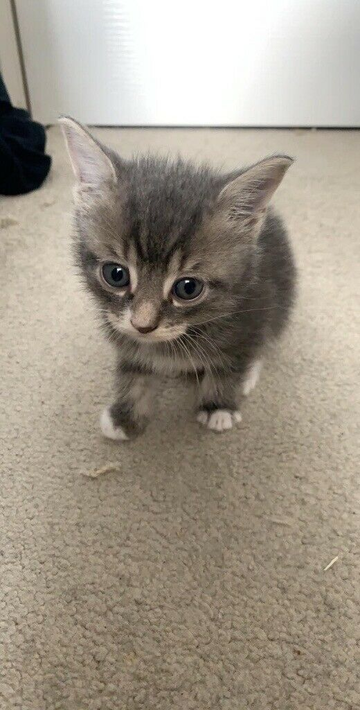 kittens for free in