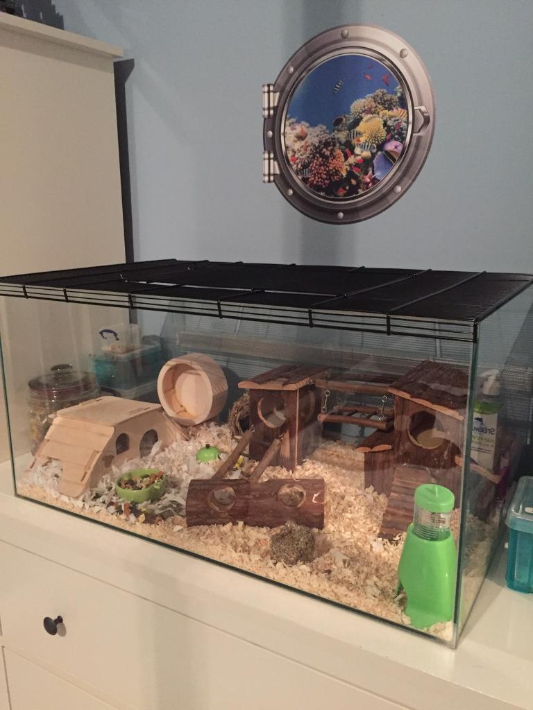 terrarium hamster