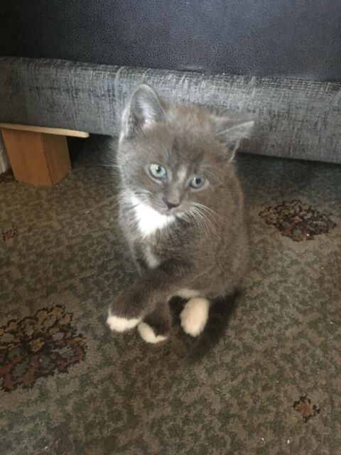 kittens for sale in
