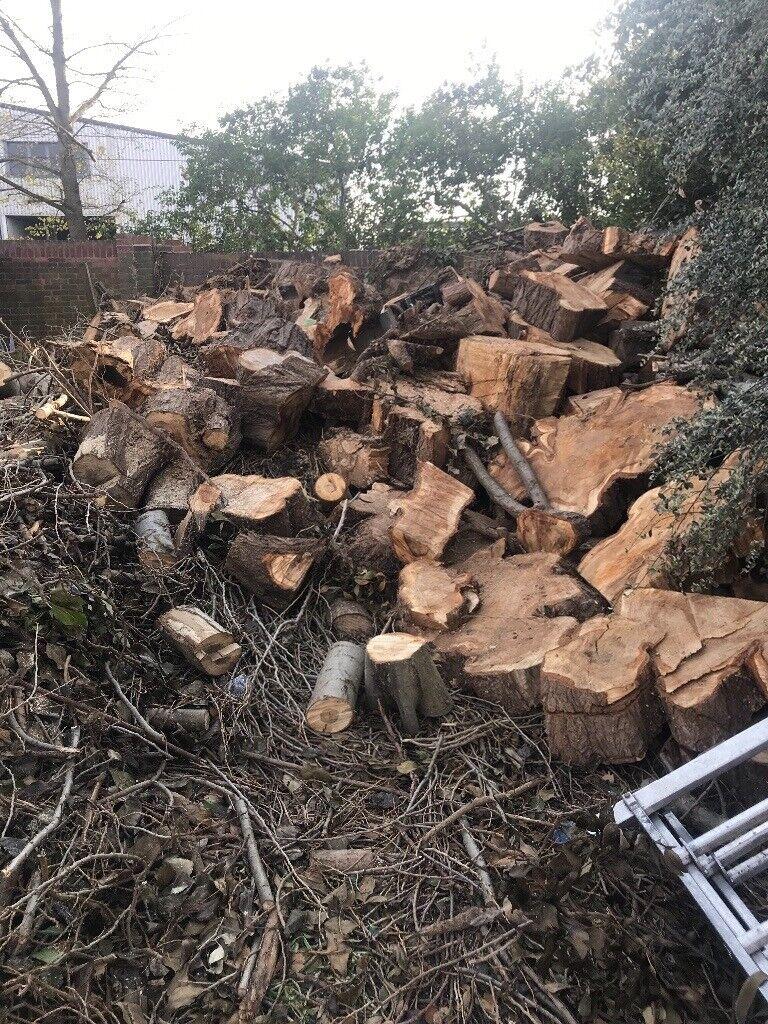 free large tree logs