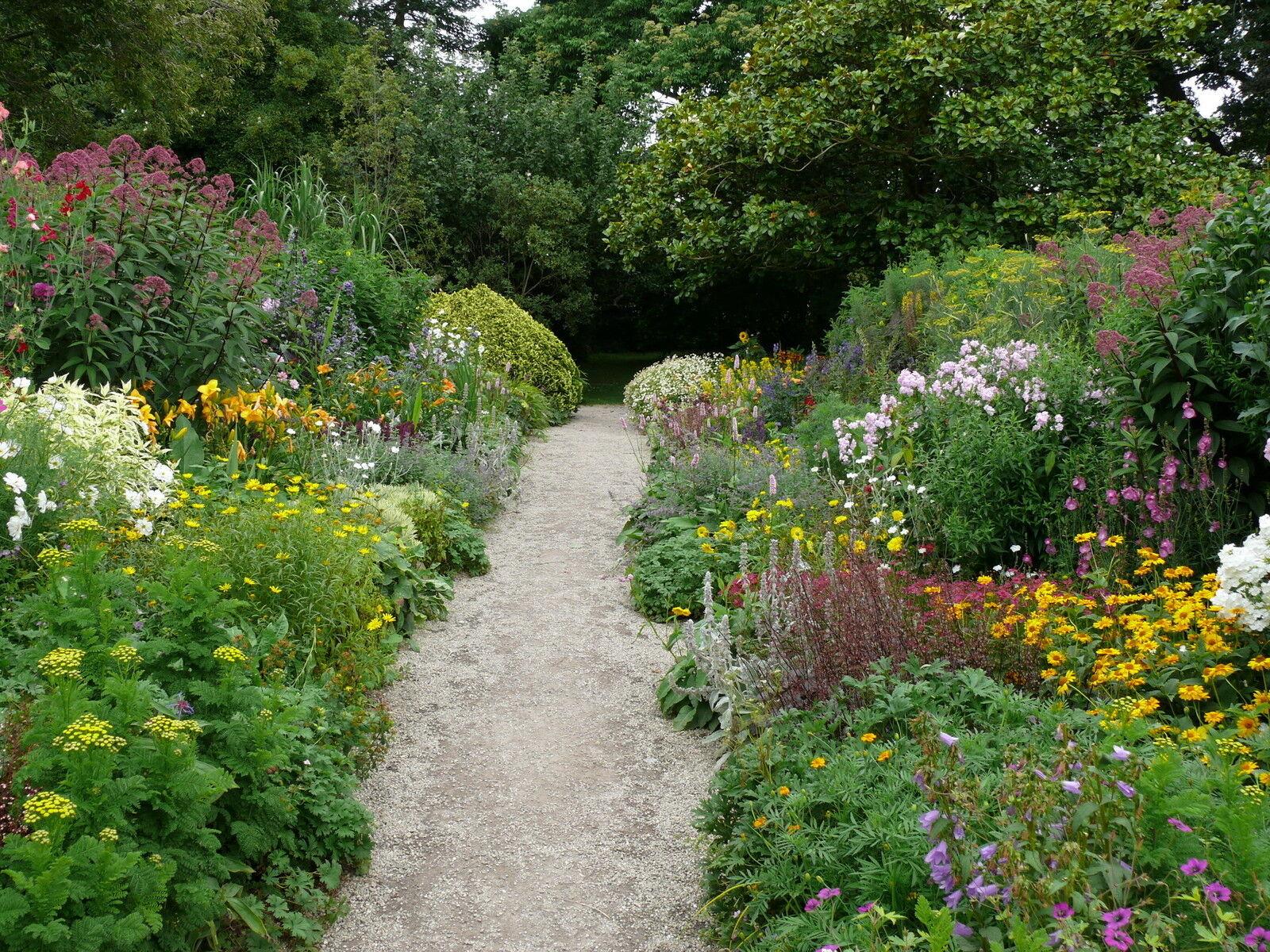 10 x mixed mature garden shrubs