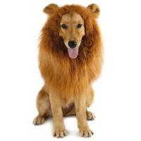 Dog Lion Costume | eBay