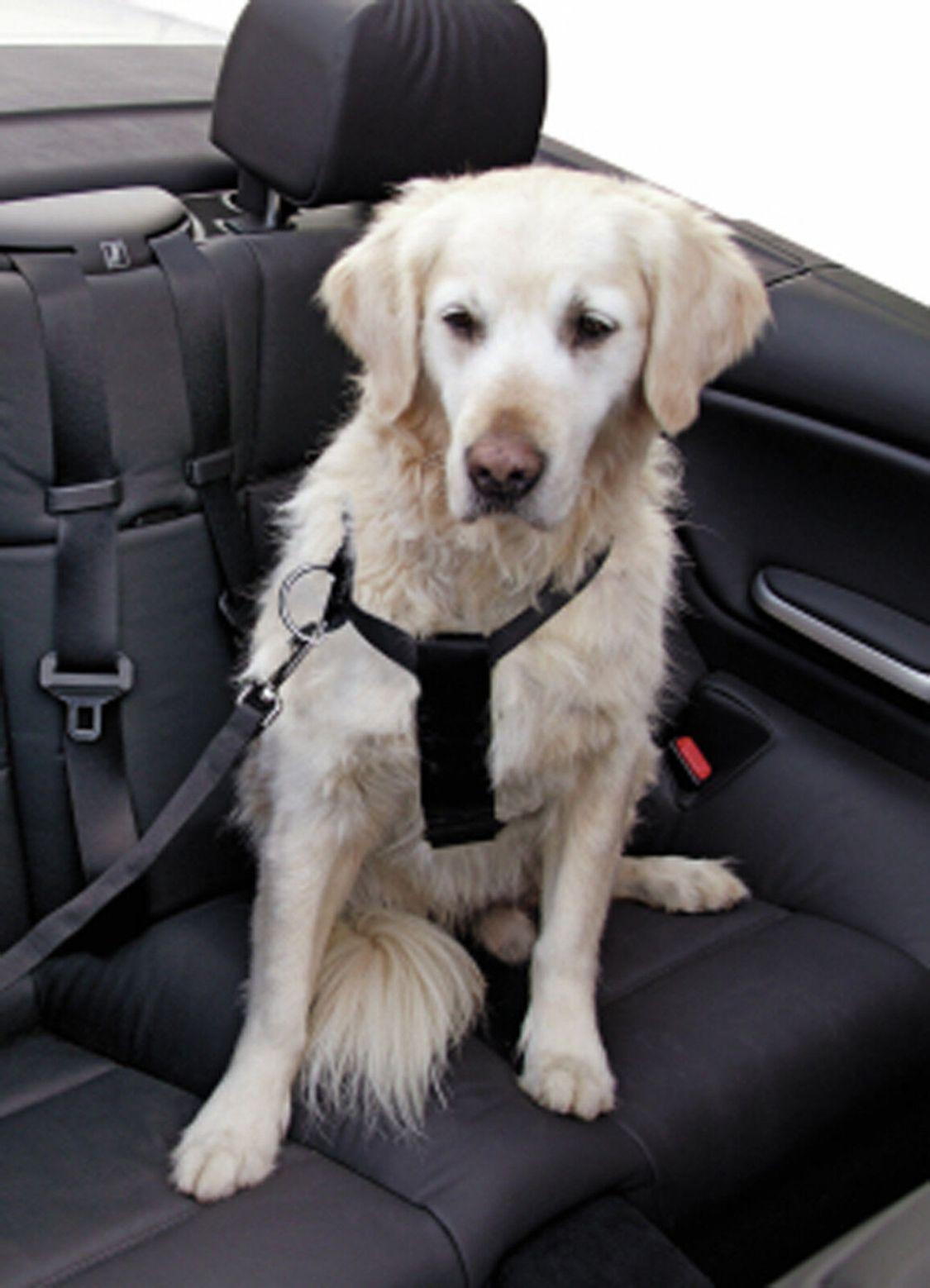 Kerbl Auto Hunde Geschirr Sicherheitsgurt  Sicherheitsgeschirr Anschnallgurt