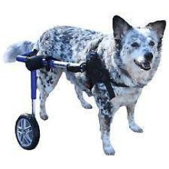 Wheel Chairs For Dogs Staples Office Chair Sale Dog Wheelchair Ebay Small Wheelchairs