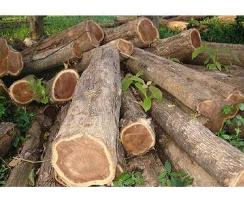 free loads of tree