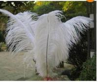 Wholesale White Ostrich Feathers | eBay