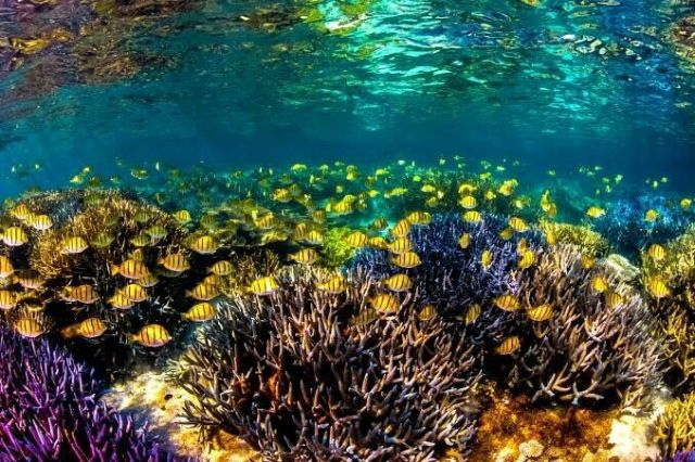 WANTED: Payed Boat Tour of Ningaloo Reef for 5. | Other Hiring | Gumtree  Australia Carnarvon Area - Coral Bay | 1250543546