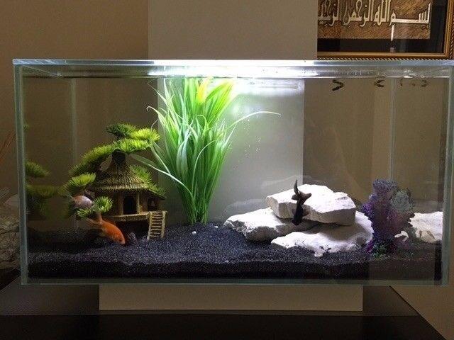 Fluval Edge 23l Fish Tank *with Nano Heater*  In Swansea