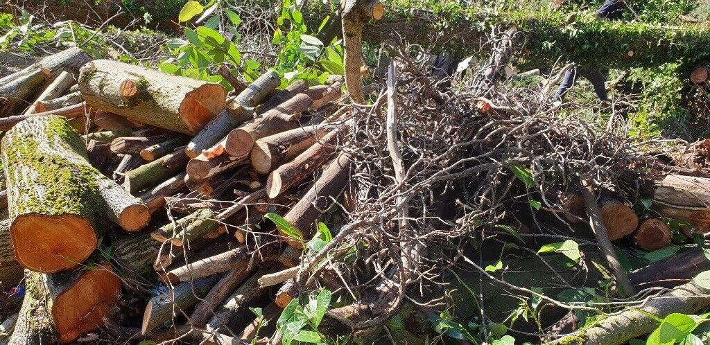 tree logs free to
