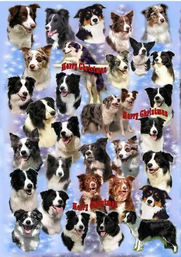 Border Collie Christmas Cards EBay