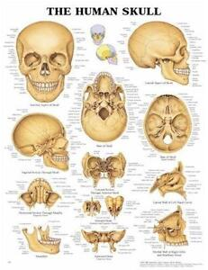 Vintage anatomical chart also charts books ebay rh