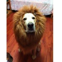 Dog Halloween Costume | eBay
