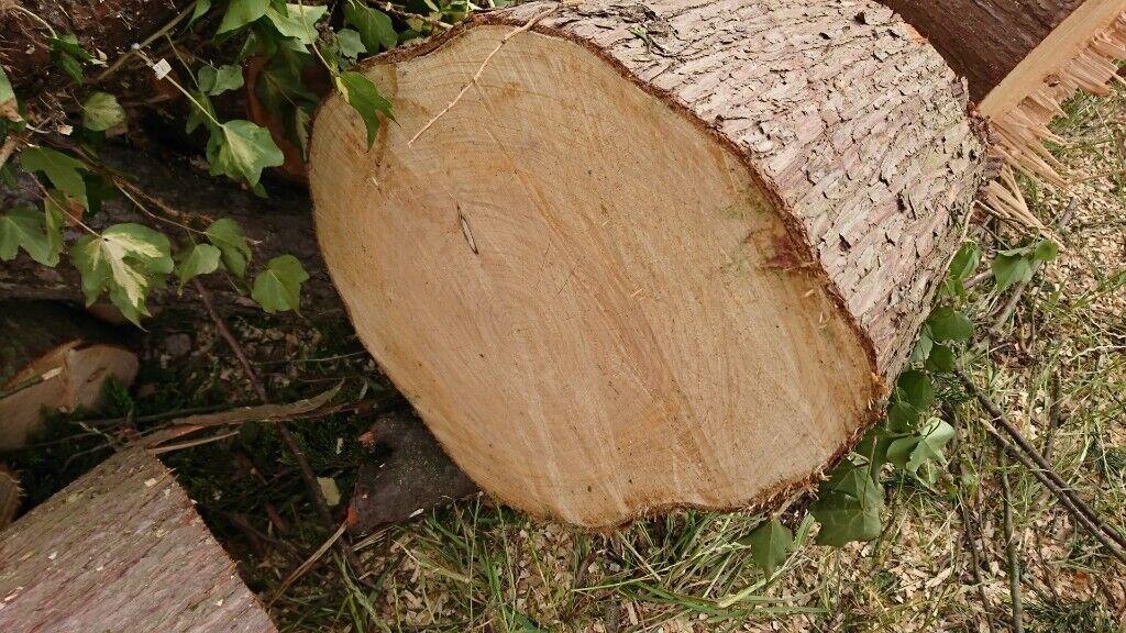 free tree logs wood