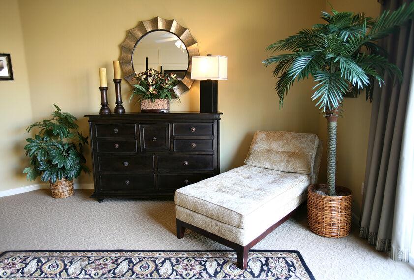 Tipps fr die Innenraumgestaltung mit Phoenix Palmen  eBay