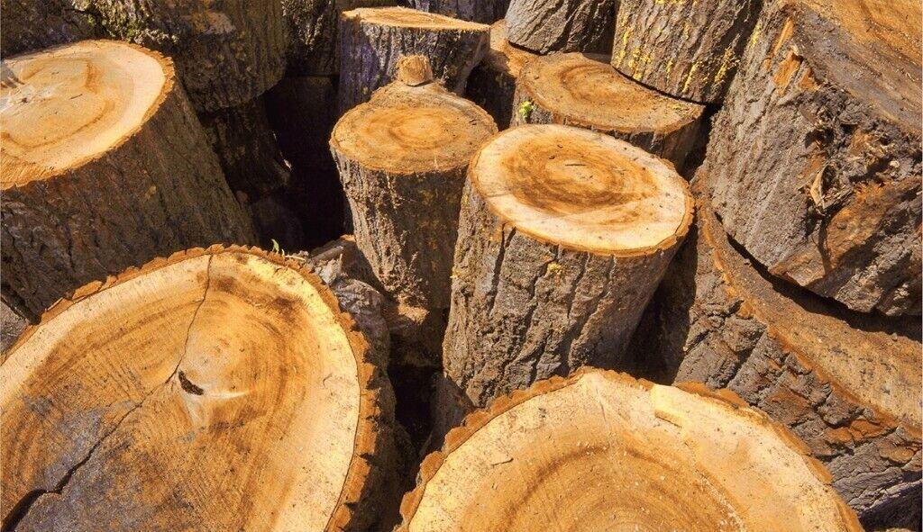 free tree stumps and