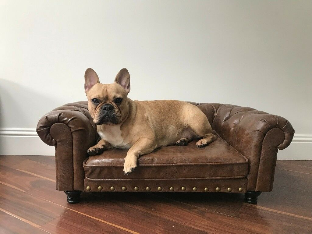 sofas for dogs uk zuo sleeper sofa dog bed max contemporary beds by