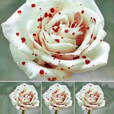 200pcs Schöne Weiße Tropfen Blut Rosen Samen Haus Garten Blumen Pflanzensamen