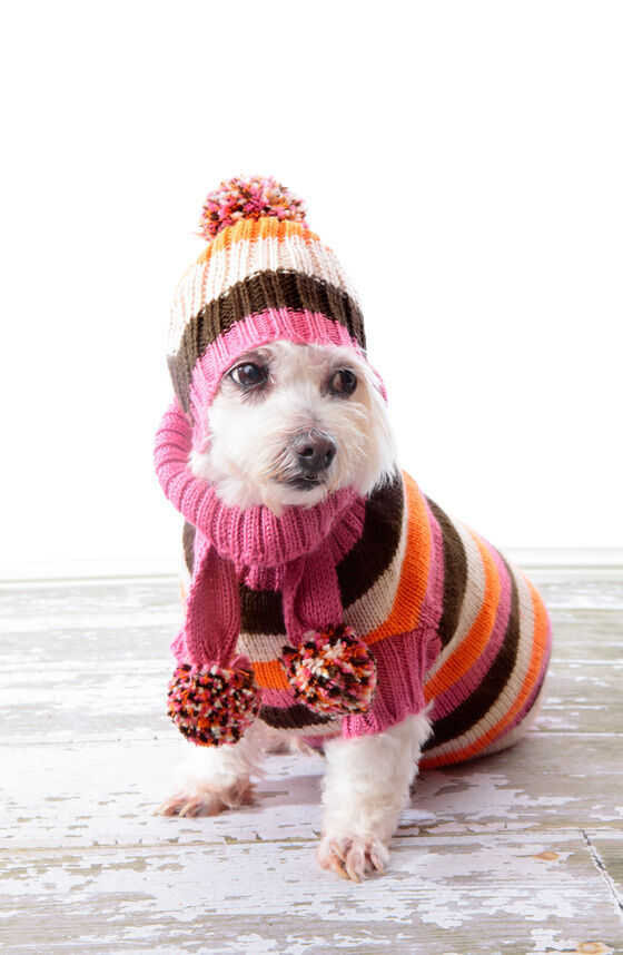 DIY No Sew Dog Clothes EBay