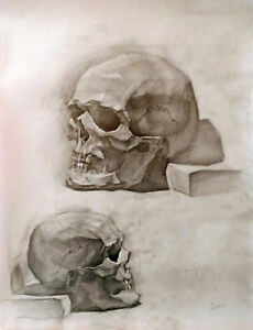 Academic Drawing Anatomy Scull Study Graphite Vintage ...