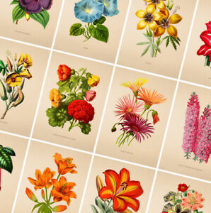 details about flower posters vintage prints botanical poster gift wall art home decor