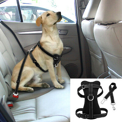 Lab puppy in a dog seatbelt in the backseat of a car.