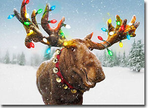 Decorated Moose Antlers 10 Funny Boxed Christmas Cards By