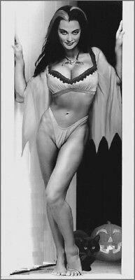 Lily Munster Naked : munster, naked, MUNSTER, LITTLE, RISQUE, HALLOWEEN