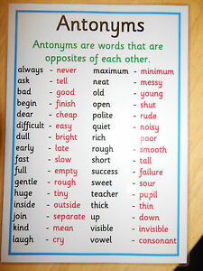 Antonyms A4 Poster KS2 KS3 Literacy Reading Writing
