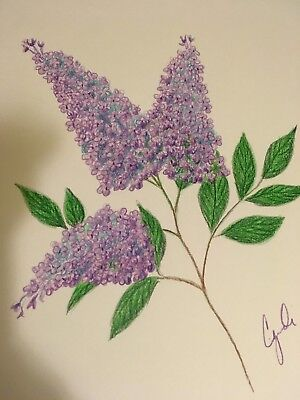 Lilac Flower Drawing : lilac, flower, drawing, Colored, Pencil, Drawing, Flowers, Lilac