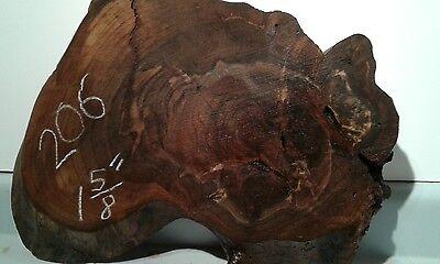 Burl Walnut Stump