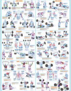 Image is loading weight training exercise poster body building chart also lifting rh ebay