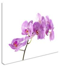 Purple Orchid Floral Flower Canvas Wall Art Picture ...