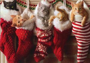 Kittens In Christmas Stocking Box Of 10 Avanti Cat