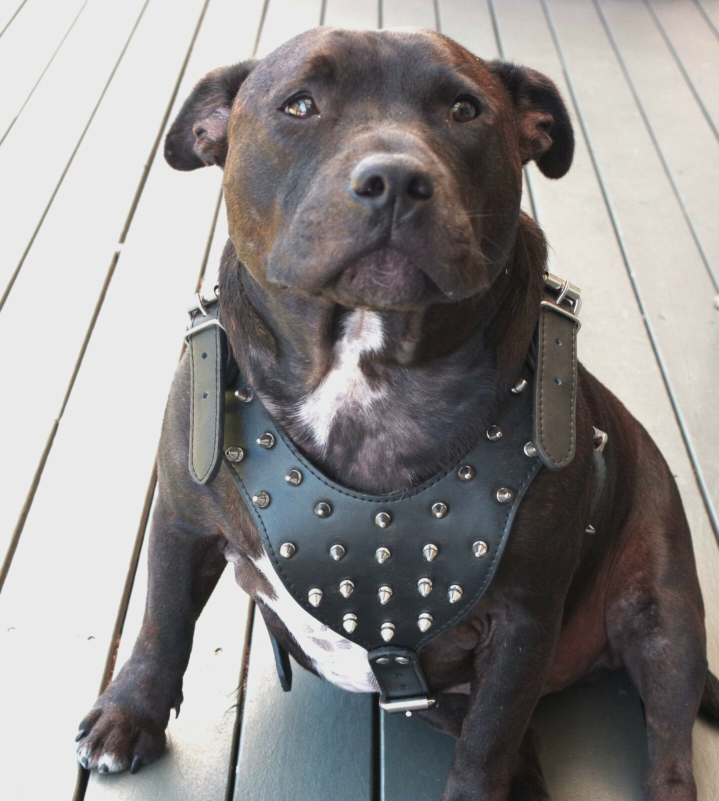 Dog Harness Leather Collar Leash Set For Pitbull Mastiff
