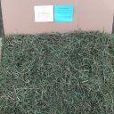 30 lb – ORGANIC 3rd Cut Hay! Timothy Mixed Grass Hay, Guinea Pig hay, Rabbit hay