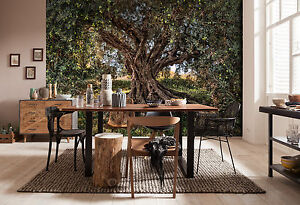 Fotomurale komar road | poster per parete national geographic. Giant Wall Mural Photo Wallpaper 368x254cm Olive Tree National Geographic 4036834085315 Ebay