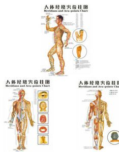 Image is loading chinese medicine body acupuncture points meridians and acupoints also rh ebay